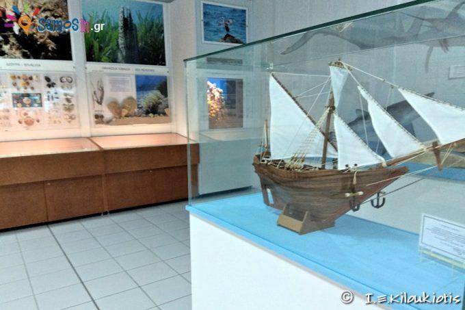 Exhibits of Marine Life department