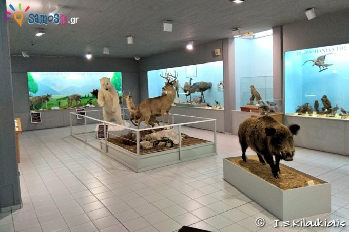 Exhibits of Zoological department