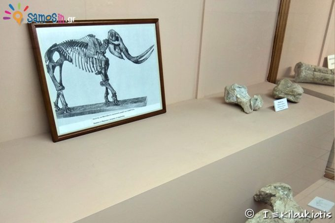 Exhibits of Paleontological department