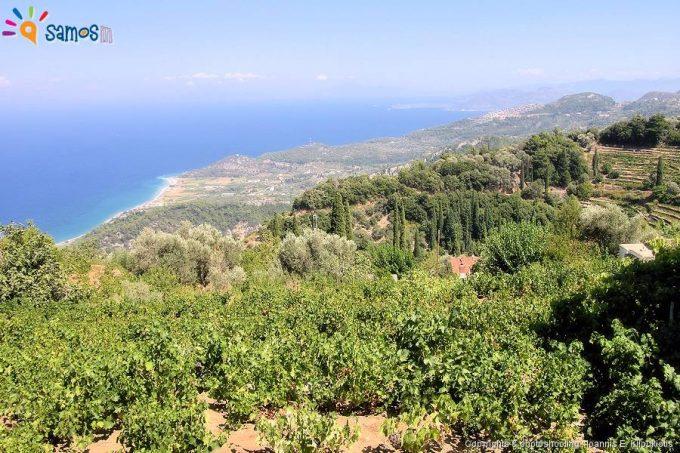 θέα προς τα ανατολικά του χωριό Άμπελος