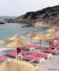 Beach Proteas