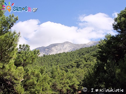 Mediterranean conifer forests in Samos island