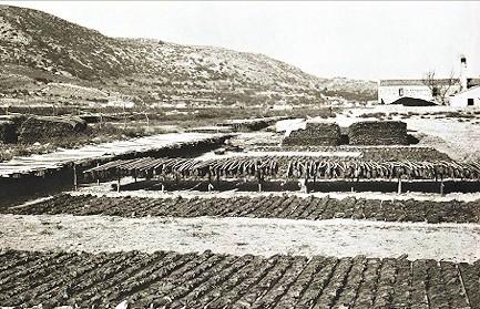 Ξήρανση καπνού στον κάμπο του χωριού Χώρα